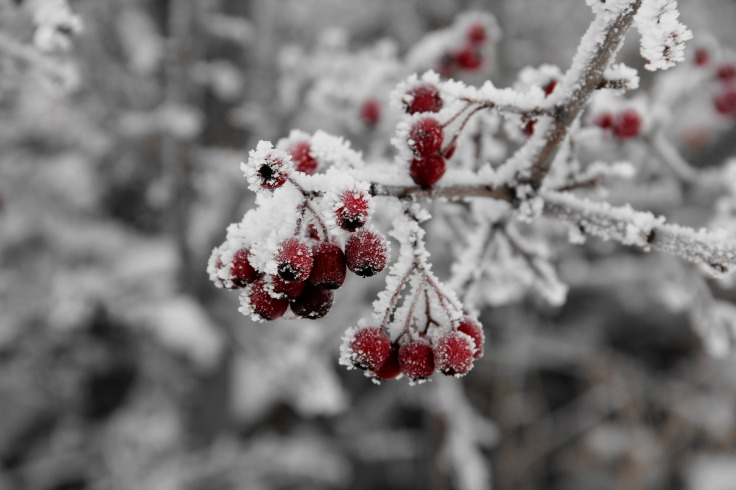 berry-cluster