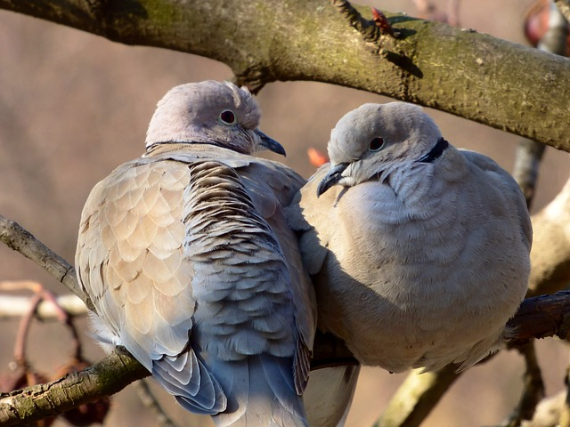bird-706801_640